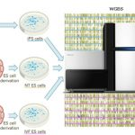 snippet-pluripotent-stem-cells